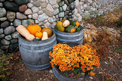 Barrels of Autumn