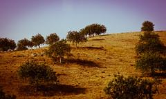 Field (Kaunokainen) Tags: summer portugal field europa europe estate campo algarve portogallo iberianpeninsula penisolaiberica