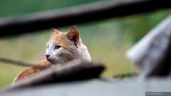Mr. Cat Again