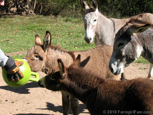 Donkey Ball 10