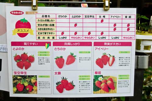 My garden 0105 September 18, 2010