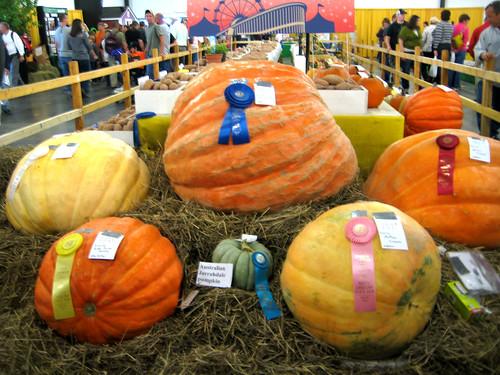 Prizewinning pumpkins!