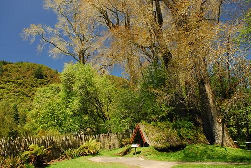Rotorua_1 003