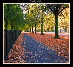 You Saw Me Standing Alone (Mike926.) Tags: road trees sky green fall mike leaves sign path branches lamppost roadsign railings derby pathway lonelywalk platinumphoto flickraward mikederby ringexcellence dblringexcellence