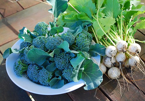 broccoli and turnips