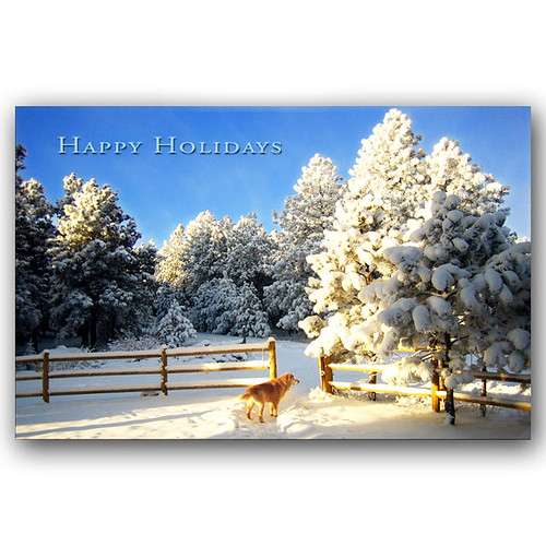 Golden in Snow Holiday Card