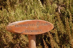 Rosmarino (kikkedikikka) Tags: cook sicily cartello sicilia cucina olio rosmarino rgspaesaggio rgscastelli rgsnatura rgsscorci
