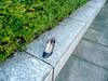 the forgotten shoe (Scorpions and Centaurs) Tags: abandoned lost shoe miltonkeynes random forgotten footwear citycentre