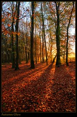 Autumn Glow (Ant_H.) Tags: autumn trees colour leaves sony hdr a700 photoengine oloneo