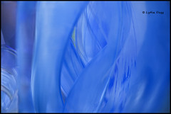 ABSTRACT CONNECTEDNESS - H6 (Lydia Dagg) Tags: top20blue bestcapturesaoi