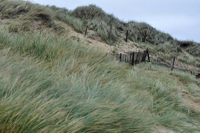 Vent dans les dunes du Rozel (7230)