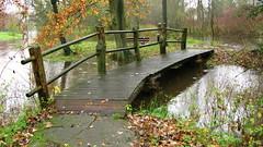 Eindhoven Flow 2010 (ToJoLa) Tags: bridge autumn tree water rain canon flow day herfst eindhoven brug regen 2010 dedommel canong9 detongelreep