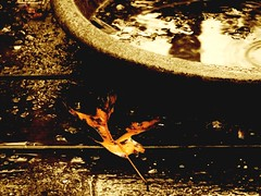 Rainy Day (Truebritgal) Tags: water rain sepia leaf day bowl drop seeds rainy coloring sheen colouring raindrop selective truebritgal