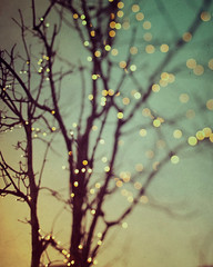 Sparkle and dance (IrenaS) Tags: blur tree night lights twilight bokeh fairylights barebranches wwwirenesuchockicom