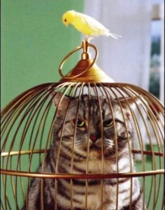 gato-encerrado
