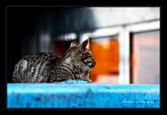 Lonely Cat (Iluminare is home!) Tags: window cat dusk lone lonely borderfx