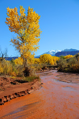 Desert Stream in Fall with Snowy Mountains (ultimateplaces) Tags: autumn trees red wild orange snow mountains fall nature leaves yellow creek landscape sandstone stream desert mud snowy ripple scenic peak dry erosion valley moab birch onion flowing shallow professor aspen capped muddy riparian lasal castleton