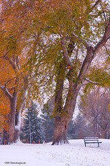 Autumn Snow Park Bench (Striking Photography by Bo Insogna) Tags: park autumn trees winter red white snow fall nature yellow rural forest landscape photography woods colorful gallery snowy decorative fineart country rustic scenic peaceful wallart calm foliage galleries gifts posters parkbench firstsnow striking beanch greatgifts strikingphotography coloradonaturephotography boinsogna thelightningmancom strikingphotographycom insogna thelightningman jamesinsogna canond7 reasonablegifts autumnprintsforsale fallfoliageprintsforsale colorfulautumnwallart autumnstockphotos autumnstockimages