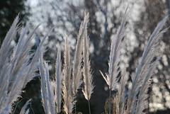 It looks like winter... (SarahBeth71090) Tags: nature tag3 taggedout tag2 tag1