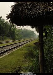 Destination-Chuadanga, Bangladesh (Asif Adnan Shajal) Tags: green nature rural countryside asia village bongo gram railwayline bangladesh desh southasia banga explored chuadanga villageofbangladesh framebangladesh asifadnanshajal chuadangabangladesh railwaylinebangladesh