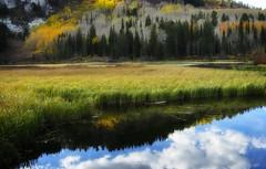 Marshy Silver Lake