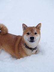 SCHMAJL! Det är snö!