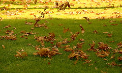 Windy (hapal) Tags: autumn green nature grass yellow leaf iran wind tehran      mellatpark    canoneos40d  hamidnajafi