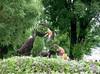 Mosai Canada 150 garden sculptures (Gillian Walker) Tags: canada 150 day 2017 mosai mosaicanada150 gatineau