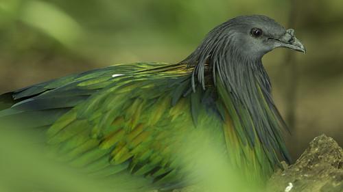 Blurred green bird