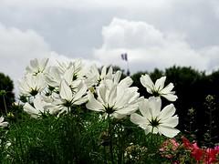 #Paris #champselysees #flower #Blume #Wochenende #flowers  #flowermagic #arcdetriomphe #travel #travelphotography #visitparis #France #parisjetaime #bluesky #summer#photooftheday#beautiful #wanderer  #picoftheday#heute #today #himmelblau #himmel #blau #sk (hassan.hd) Tags: beautiful visitlafrance clouds flowermagic bluesky arcdetriomphe france heute wolken paris worldplaces photooftheday today himmelblau picoftheday flower sky travelphotography wanderer visitparis summer blau parisjetaime blume champselysees blick himmel weekend flowers travel wochenende