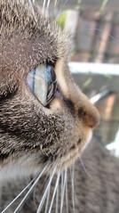 Cat Eye (★Nadine★) Tags: macro eye cat eyes sony makro cateye hx5v sonyhx5v