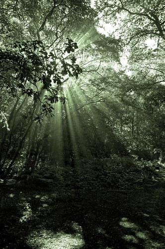 [フリー画像] 自然・風景, 森林, 日光・太陽光線, 201007311900
