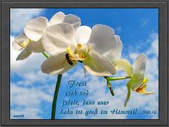 Freut euch und jubelt / Rejoice and be glad (Martin Volpert) Tags: flower fleur christ god faith flor blossoms pflanze kirche blumen bible blomma christianity orchidee blume bibbia fiore blte blomst bibel virg gemeinde lore biblia bloem blten gott blm iek floro kwiat flos ciuri glaube bijbel kvet kukka cvijet ecclesia flouer glauben christentum blth jesuschristus cvet zieds bibelvers is floare  blome iedas bibelverskarte mavo43 sensationalcreationsofexcellence matthew512 matthus512