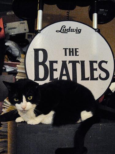Hooker Is Beatles Kitty