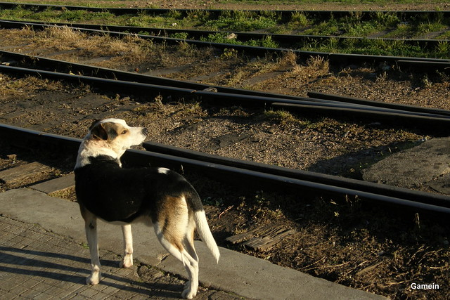 Esperando el tren
