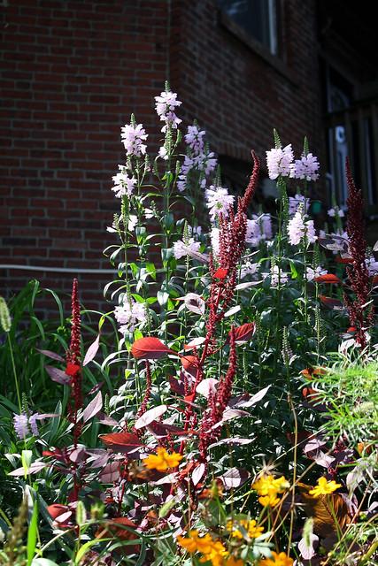 ptechnicolor garden