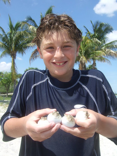 four pufferfish
