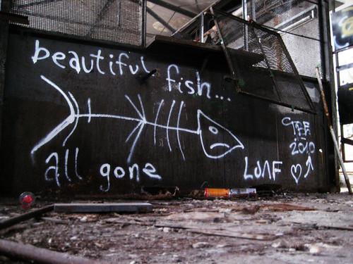 beautiful fish... all gone