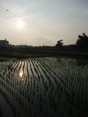 秀山村梯田,一期、二期作種稻,裡作種麥