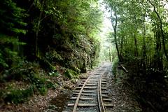 4/25/2010 (akim_hobo) Tags: trees green japan iso800 nikon rocks hiking tracks n shift trail 24mm nikkor yakushima 35 tilt lightroom f35 pce andrewkim 24mmf35 120sec d700 nikond700