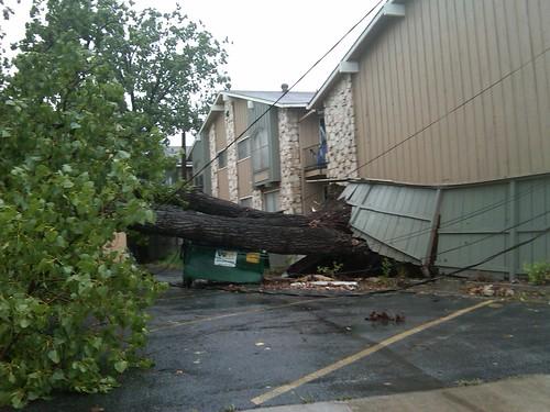 Hermine Tree Down