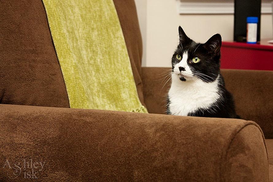 Kitty Paw Snapshot