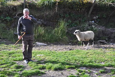 Brendan Ferris at Kells Sheep Centre (Marcus Meissner) Tags: bestof sheep marcus centre august ferris irland september brendan kells reise 2010 studiosus meissner