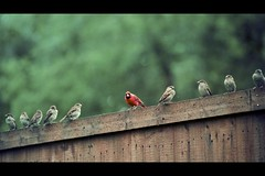 my feeder brings all the birds to the yard (*Karo*) Tags: explore explorefrontpage 70200mmf28gvrii