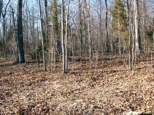 My Land Before We Put the House on It http://flic.kr/p/8zCtrg