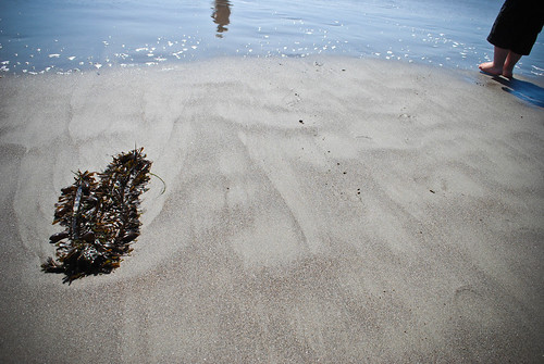 summer scrapbook :: beach adventures...