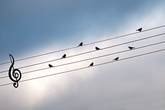 Bird On The Wire (ThorAH) Tags: autumn sky birds explore electricalwire intheair leonardcohen birdonthewire sigma18200mm thorah pentaxk7 twphch thorhalvorsen twphch070