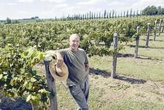 Victoria recupera su producción viñatera con la variedad Tannat
