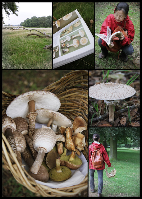Mushroom hunt in Richmond Park 1