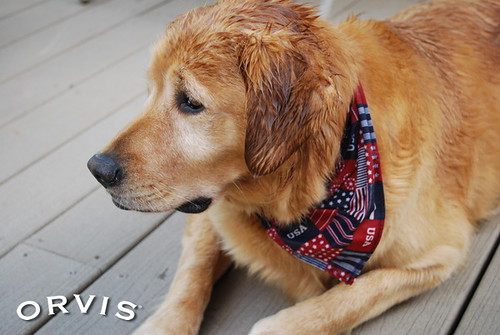 Orvis Cover Dog Contest - Honey